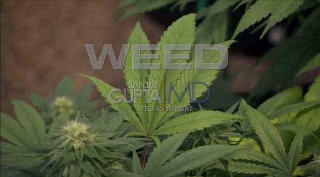 """Sanjay Gupta's """"WEED"""" Documentary"""