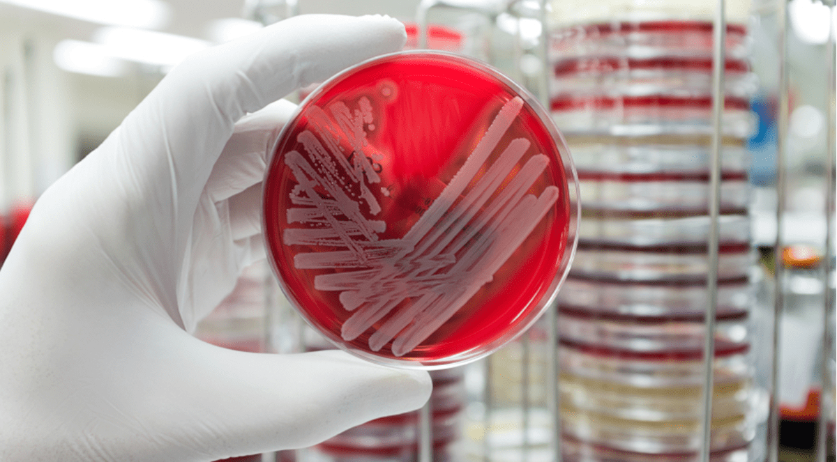 New antibiotic to fight MRSA developed