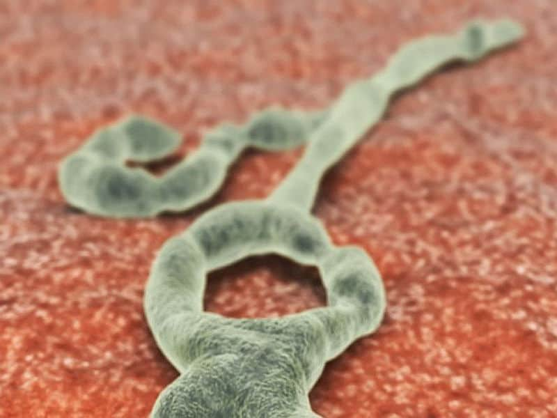 Antibodies from Ebola survivors neutralize virus