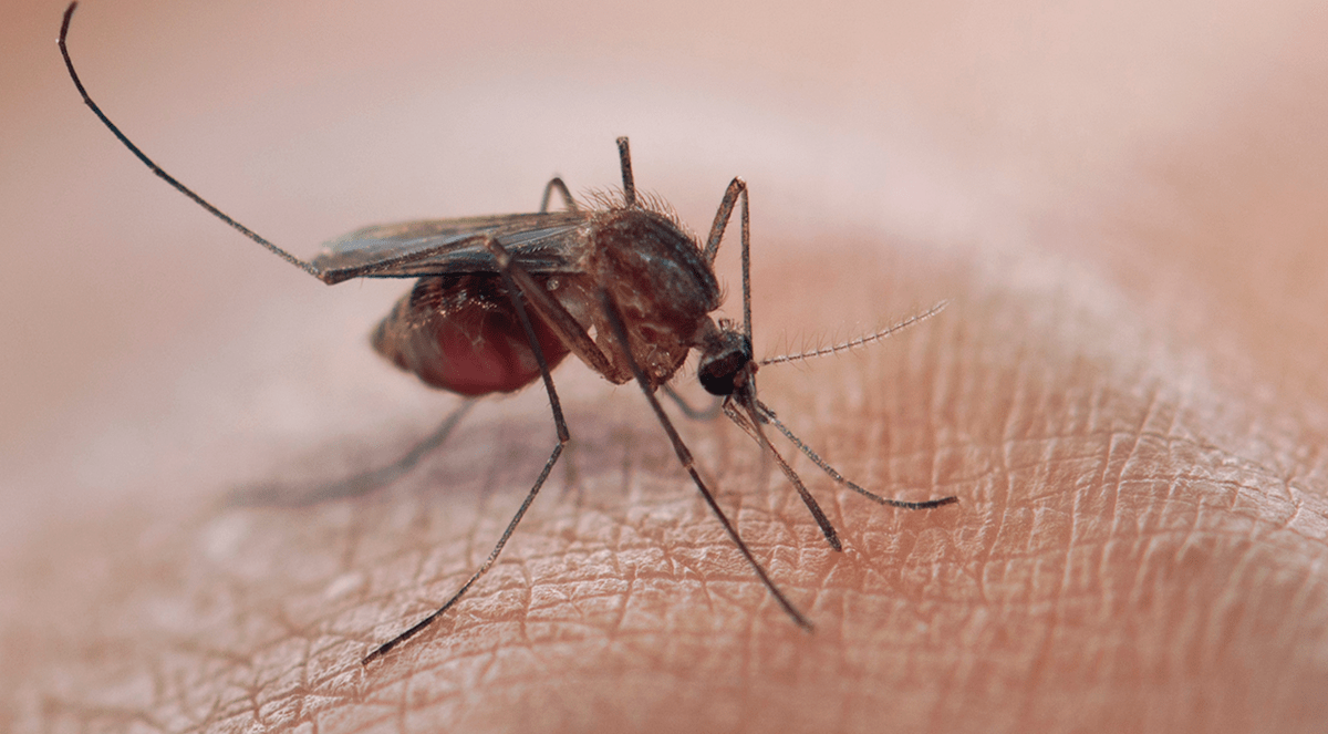 New Malaria Vaccine May Prevent Infection For Over One Year