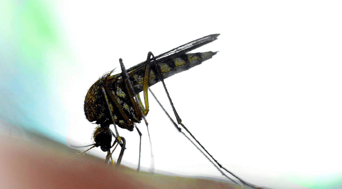 Dengue fever's economic 'bite' estimated in Lancet Infectious Disease article