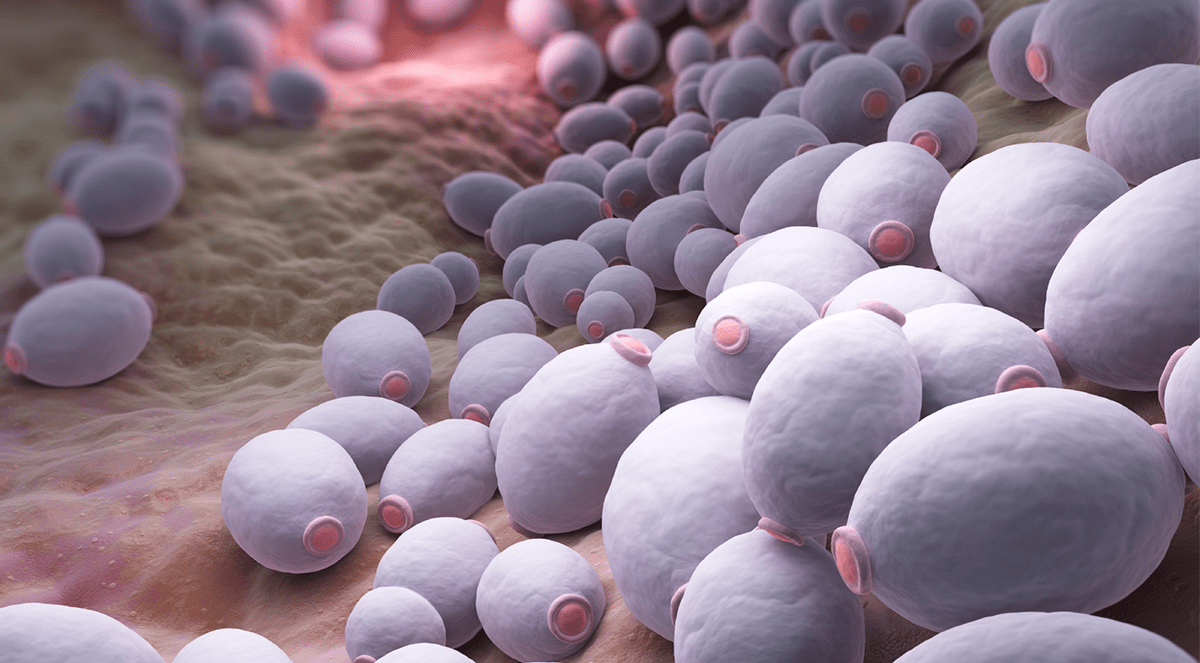 Yeast infection linked to mental illness