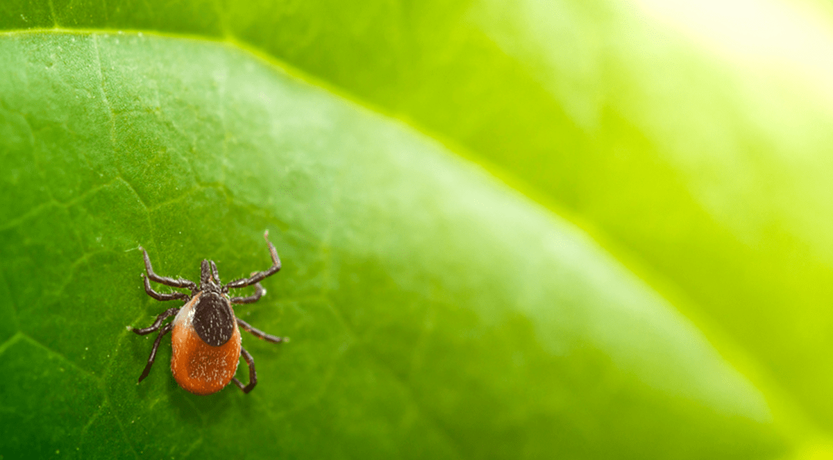 New research identifies flaws in LM-method for Lyme disease