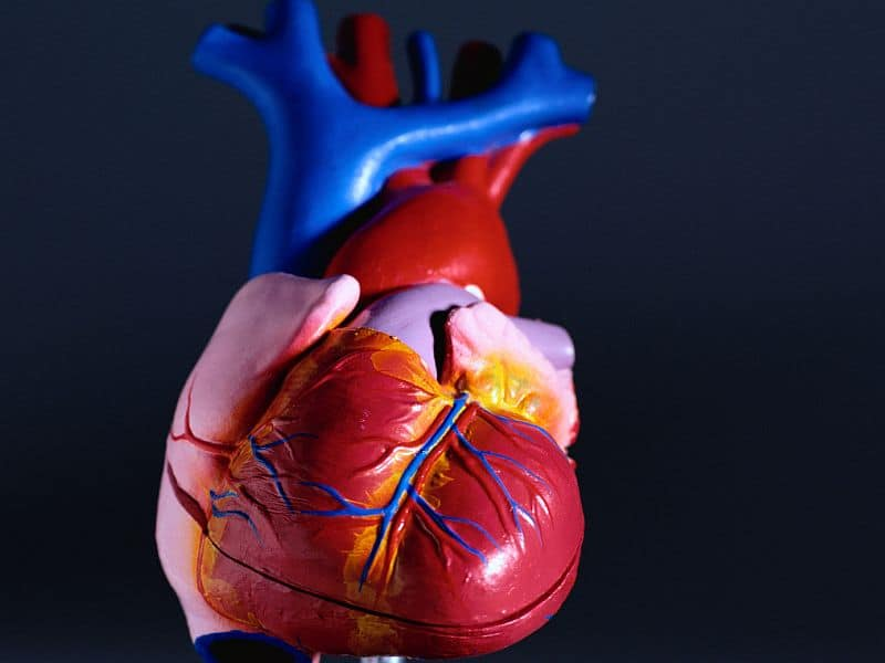 Late Mortality Mainly Noncardiac for TAVR Patients