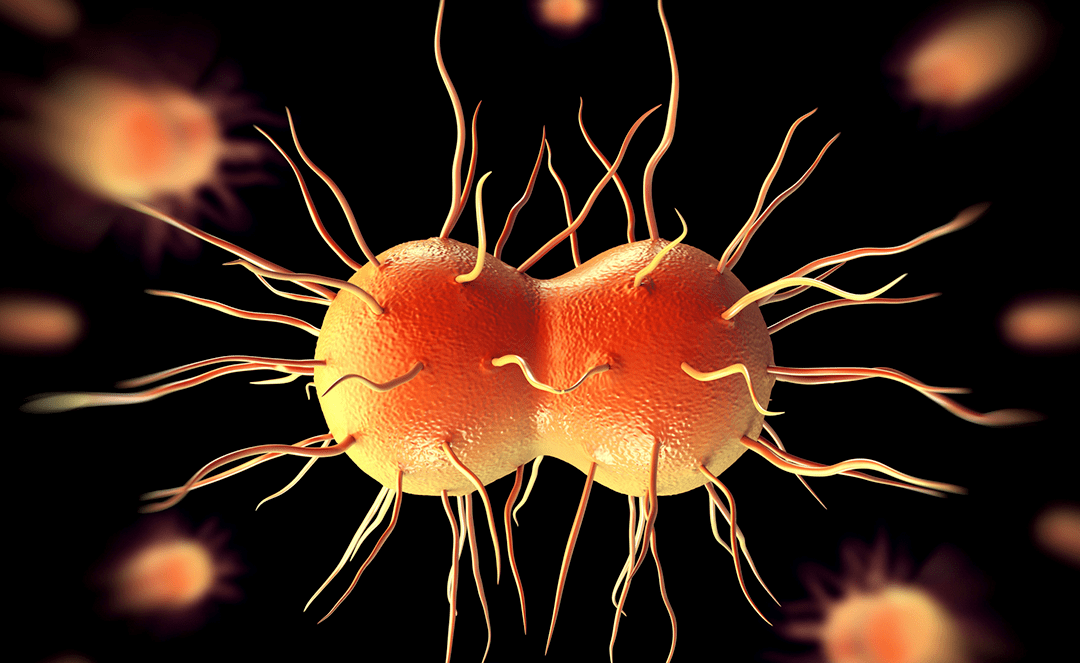 Scientists Develop New Antibiotic for Gonorrhea