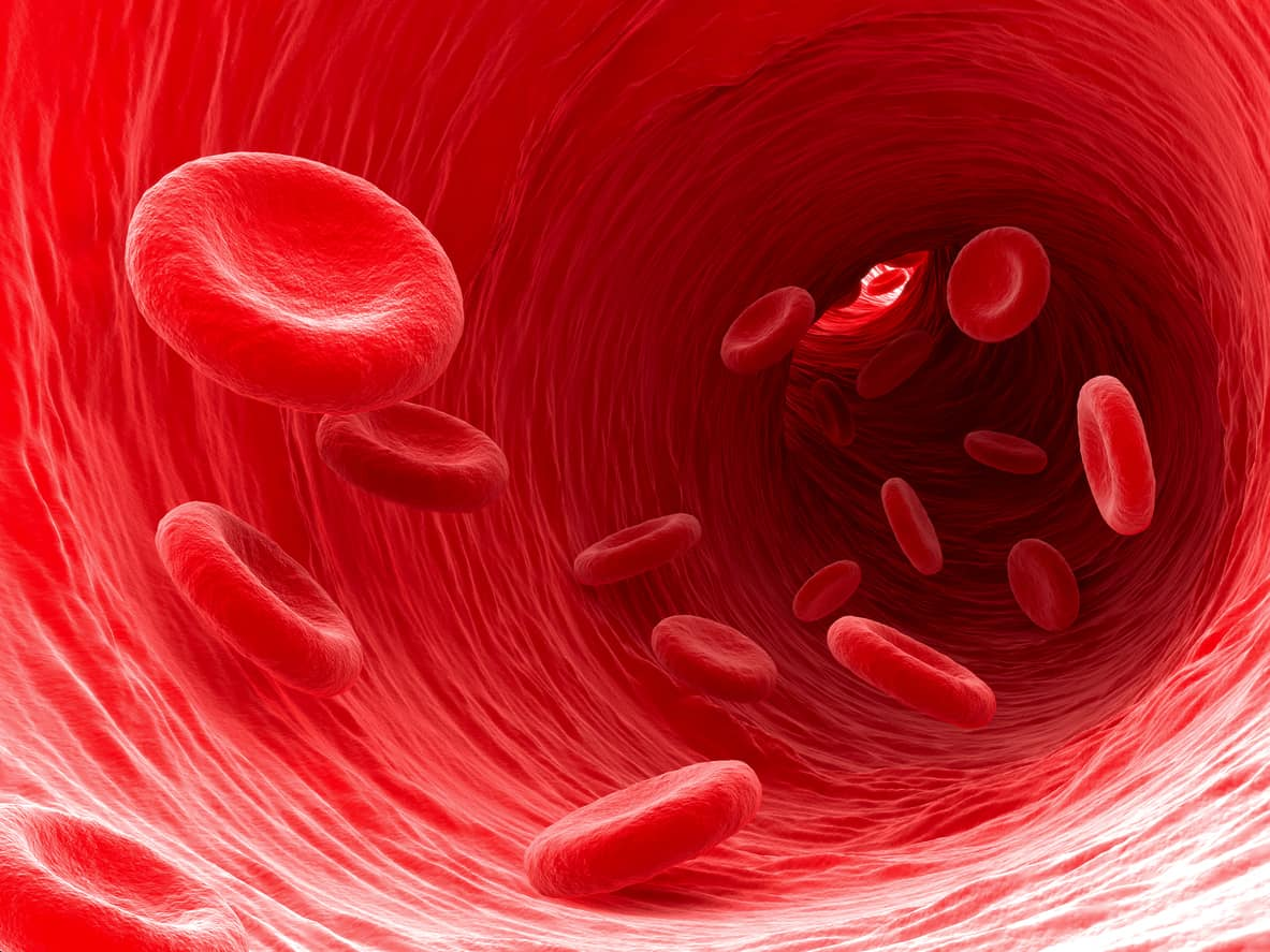Researchers Discover Key to Regenerating Blood Vessels