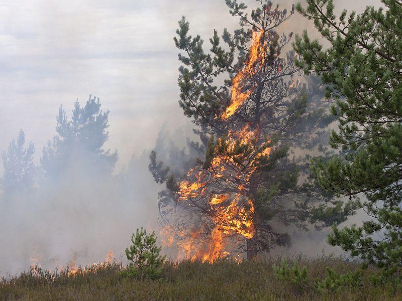 CDC: Wildfire Smoke Poses Health Risks