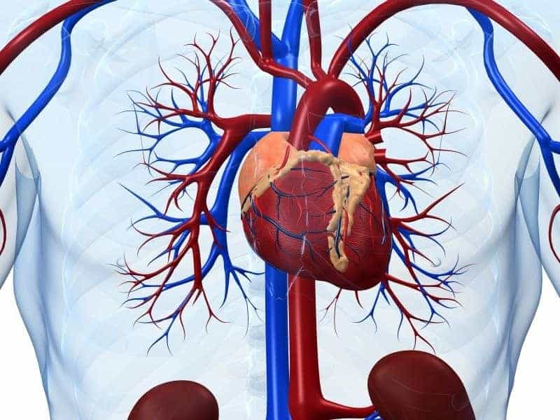 Ischemic Heart Disease, CHF Mortality Vary Across VA Systems