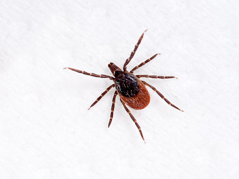 Estimated U.K. Incidence Rate of Lyme Disease 12.1 per 100,000