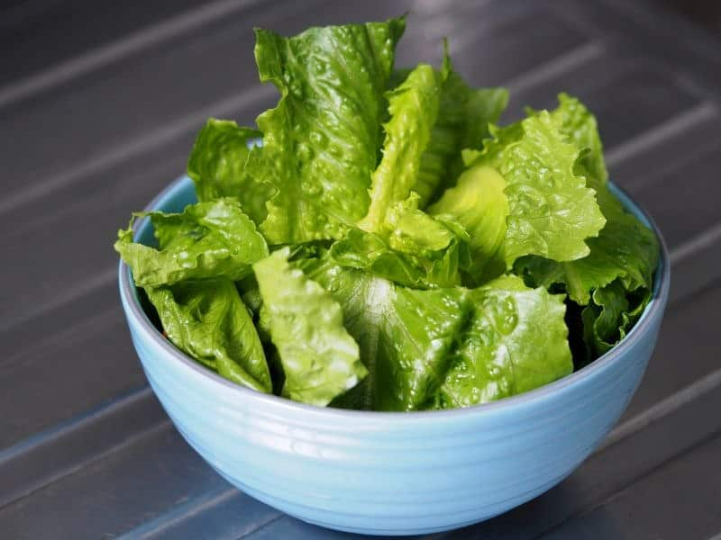 Irrigation Water Likely Cause of Romaine Lettuce <i>E. Coli</i> Outbreak