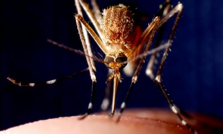 What's All the Buzz About West Nile Virus?