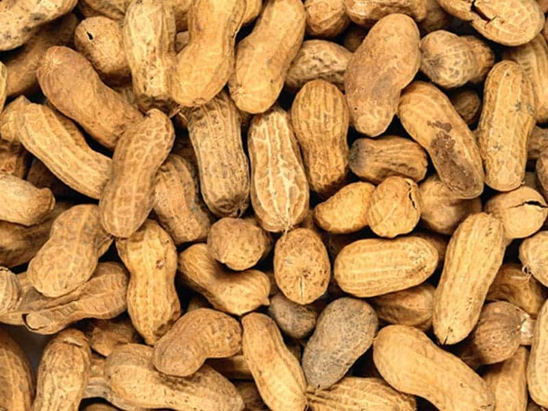 About 11 Percent of U.S. Adults Have Food Allergy