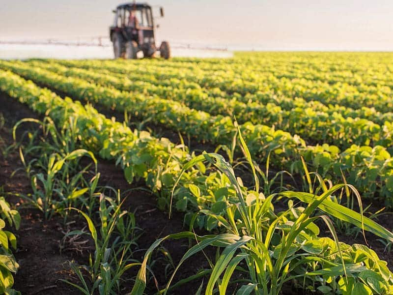 Exposure to Metals, Pesticides Tied to CVD in Hispanics/Latinos