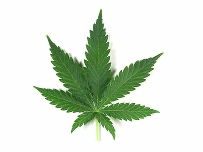 Most Adult-Use Cannabis Customers Use for Pain, Sleep Relief