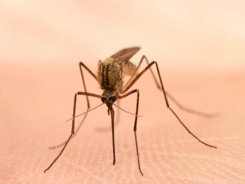Two More Cases of EEE Virus Confirmed in Massachusetts