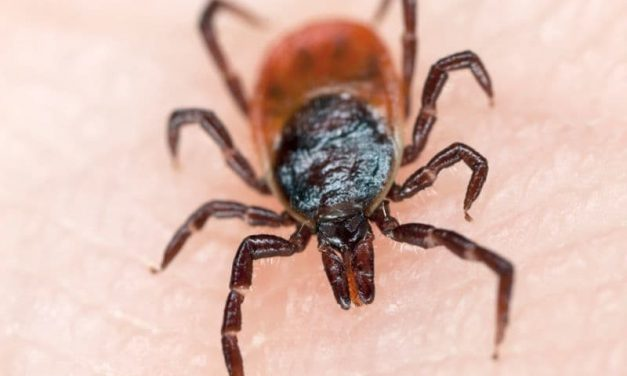 In 2018, 2,813 Cases of Domestic Arbovirus Reported in U.S.