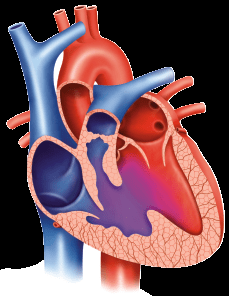 Comparing Revascularization Outcomes by Left Ventricular Dysfunction in Patients With Left Main Coronary Artery Disease