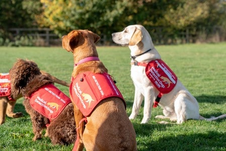 Hunt the malaria bug – a new game for sniffer dogs