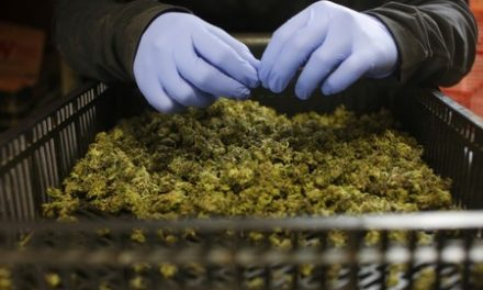 Israeli lawmakers approve medical cannabis exports law