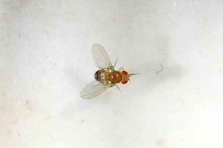 Fruit fly trial unlocks clues for 'polypill' to beat aging