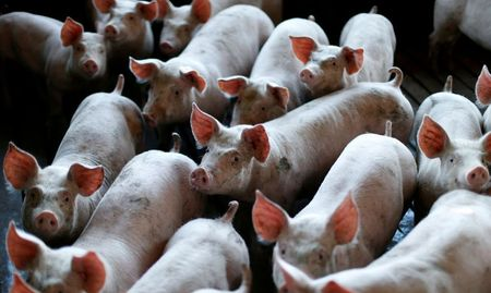 Brazil's 2020 pork, chicken exports seen growing as China swine fever disruption persists