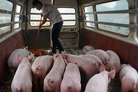Commercial pig farm in China jams drone signal to combat swine fever crooks
