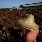 Study in WHO journal likens palm oil lobbying to tobacco and alcohol industries
