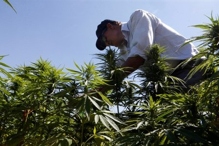 Teen cannabis use linked to higher risk of adolescent depression