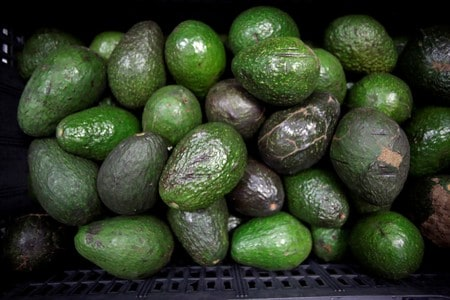 California avocados voluntarily recalled for possible health risk