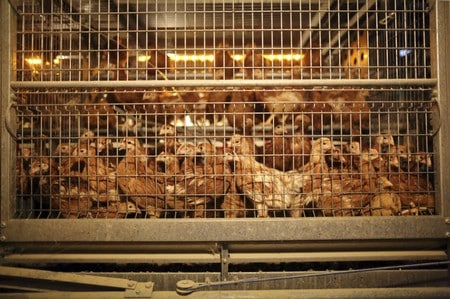 China lifts 2015 ban on French poultry imports: customs