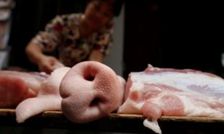 Vietnam swine fever cull surges, 1.7 million pigs dead