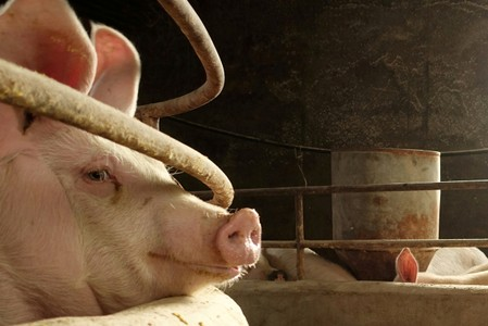 South Korea ramps up disinfection to protect against North's outbreak of African swine fever