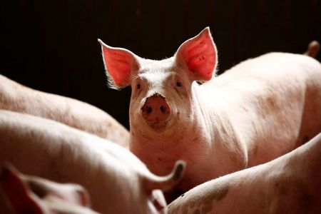 African swine fever spreads near the German border: OIE