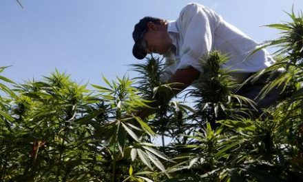 Lebanon legalizes cannabis farming for medicinal use